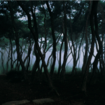 Bien-U Bae, Pine Tree, 2006, C-print on aluminium