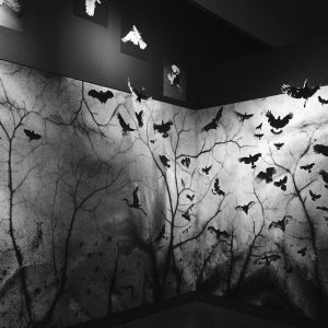 Trent Parke, 'The Black Rose' exhibition, installation view, AGSA