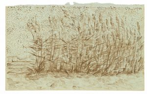 BW 22 Study of Reeds September–October 1888, Arles, , from Vincent Van Gogh: The Lost Arles Sketchbook by Bogomila Welsh-Ovcharov.  © éditions du Seuil